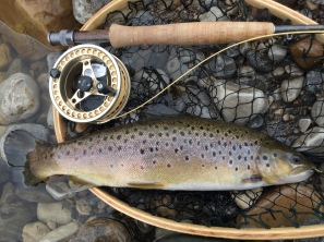 Brown Trout - Spring 2017